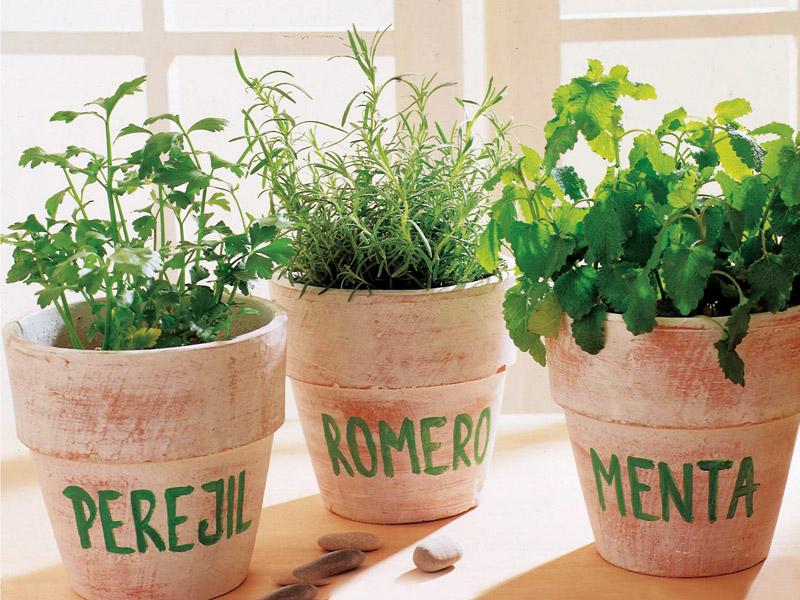 cultivo de plantas arom ticas febrero y marzo aprende