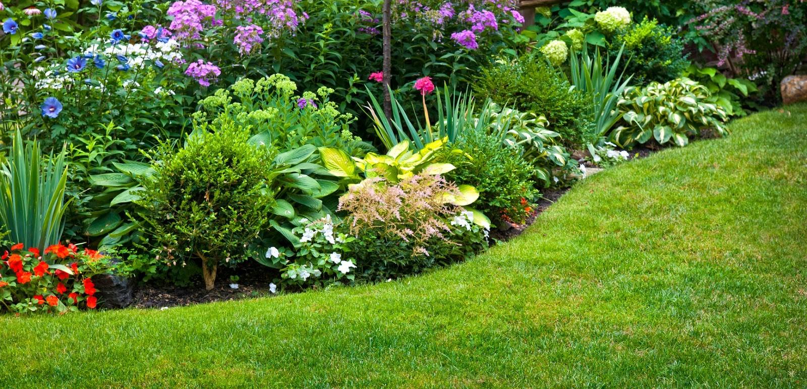 Riego por goteo como elegir - Sistema de riego automatico para jardin ...